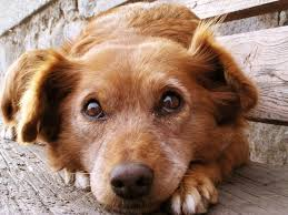 Everyone loves puppy eyes, but unless you're a vet, leave your four-legged friend out of your profile shot.